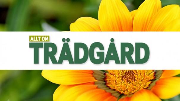 Allt om Trädgård logo