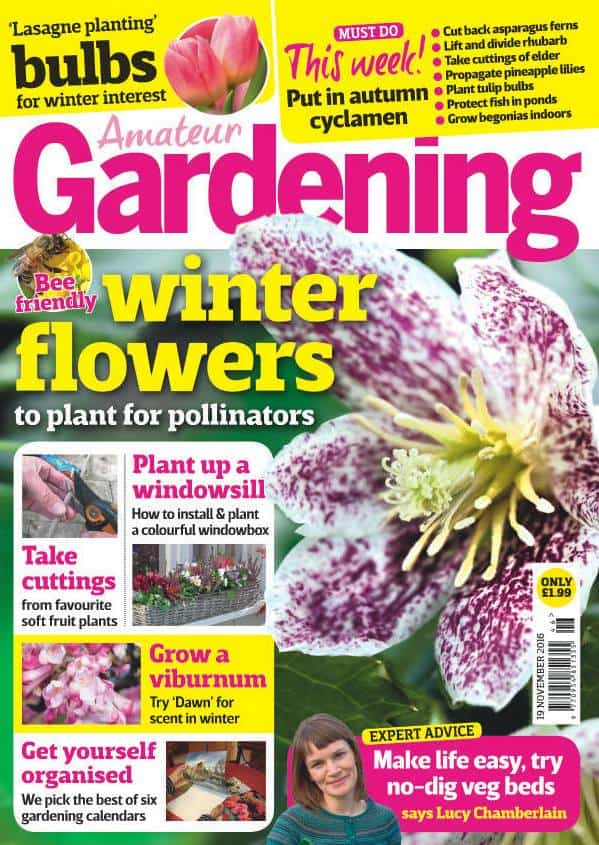 Amateur Gardening 11/2016. Bee-friendly winter flowers to plant for pollinators.
